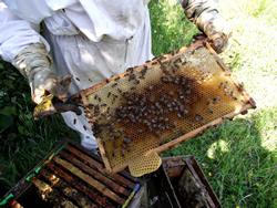 Honey Pot Farm